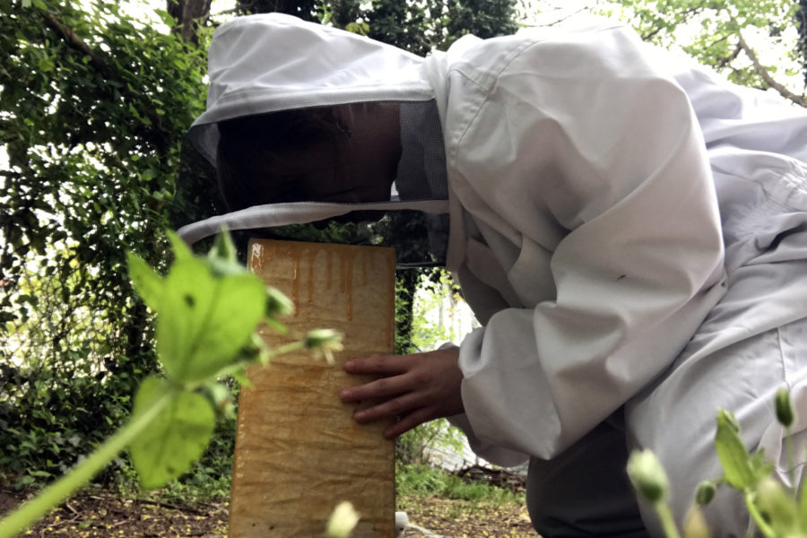 the beekeeper's lament, 2020